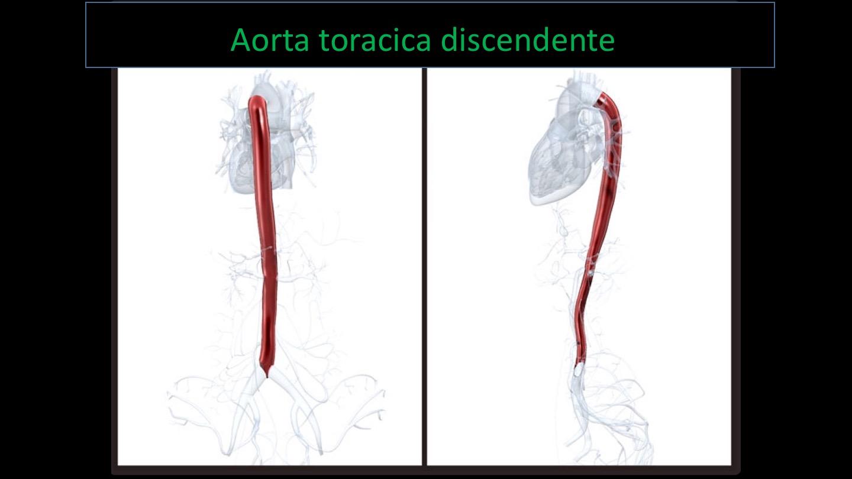 prostata dimensioni ai limiti superiori della normat